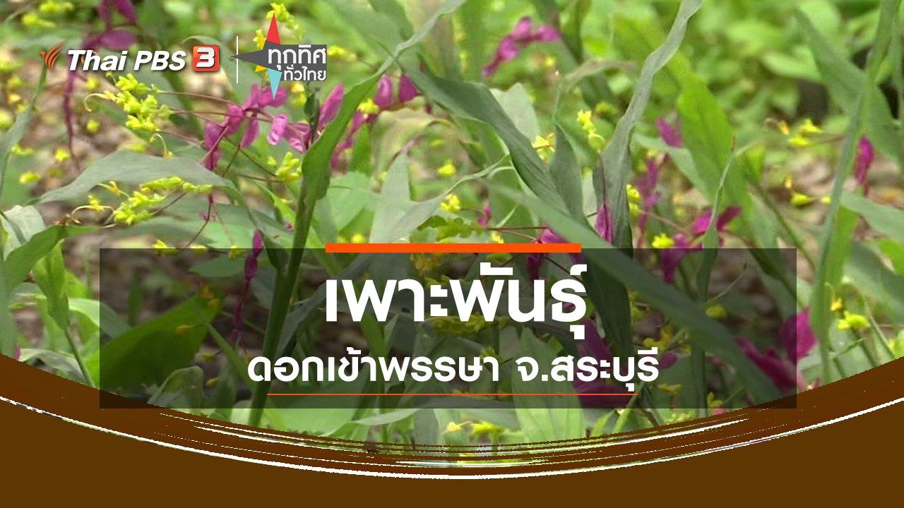 ทุกทิศทั่วไทย - เพาะพันธุ์ดอกเข้าพรรษา จ.สระบุรี