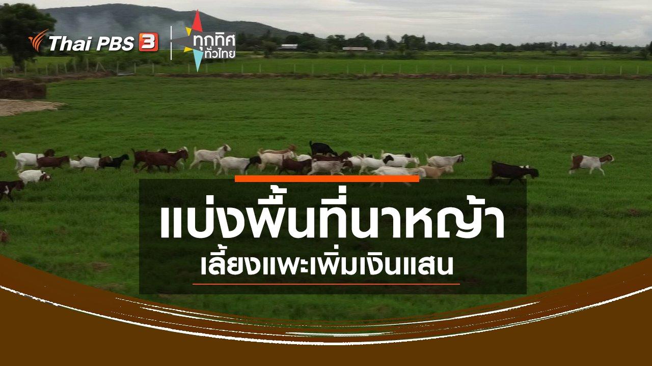 ทุกทิศทั่วไทย - แบ่งพื้นที่นาหญ้าเลี้ยงแพะเพิ่มเงินแสน จ.ชัยนาท