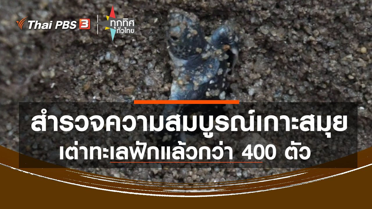 ทุกทิศทั่วไทย - สำรวจความสมบูรณ์เกาะสมุย เต่าทะเลฟักแล้วกว่า 400 ตัว