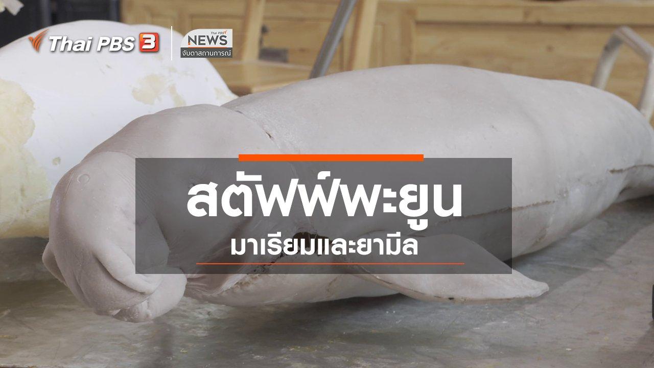 จับตาสถานการณ์ - ตะลุยทั่วไทย : สตัฟฟ์พะยูนมาเรียมและยามีล