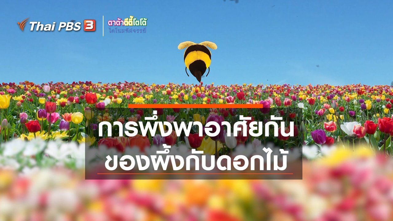 TataTitiToto ไดโนมหัศจรรย์ - เกร็ดน่ารู้กับตาต้าตีตี้โตโต้ : การพึ่งพาอาศัยกันของผึ้งกับดอกไม้