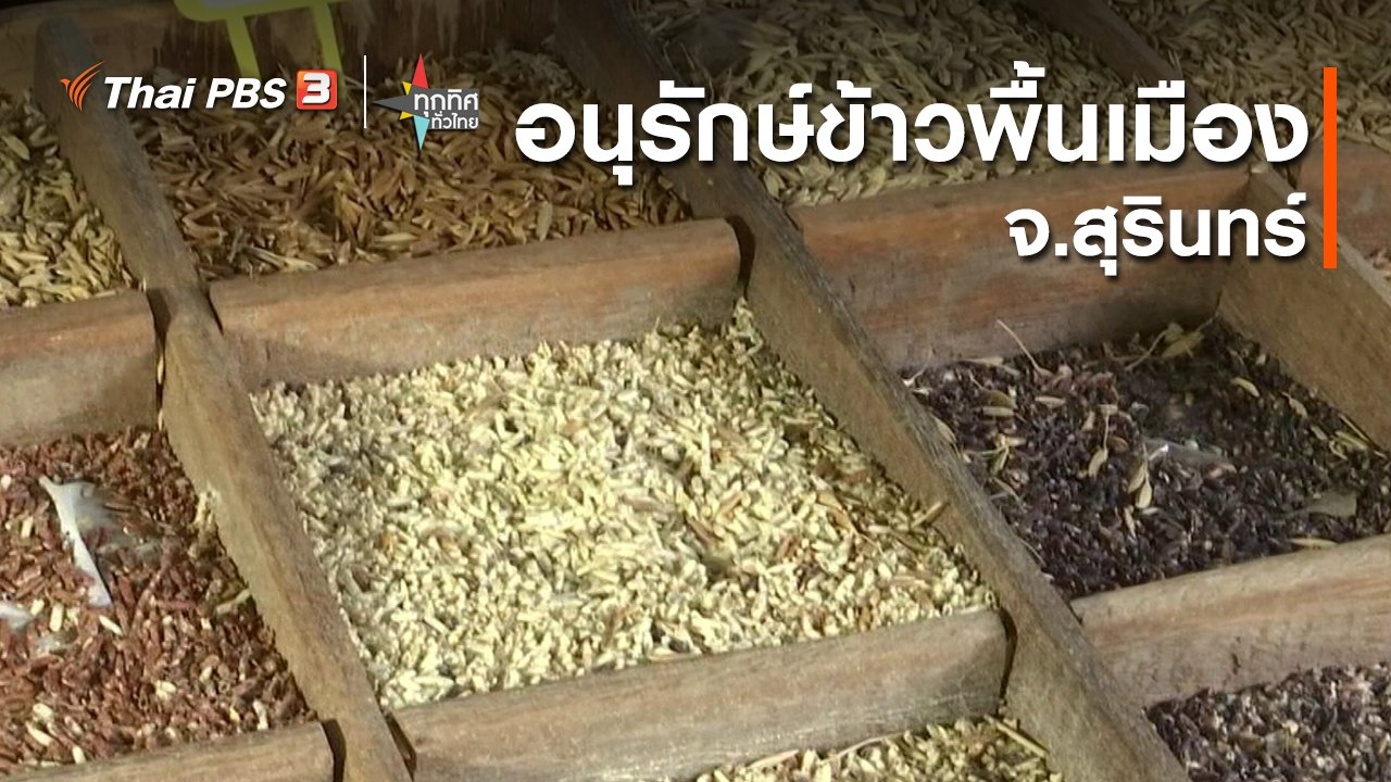 ทุกทิศทั่วไทย - อนุรักษ์ข้าวพื้นเมืองสุรินทร์