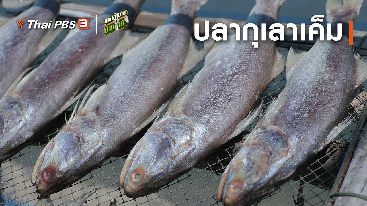มหาอำนาจบ้านนา - สูตรลับฉบับบ้านนา : ปลากุเลาเค็ม