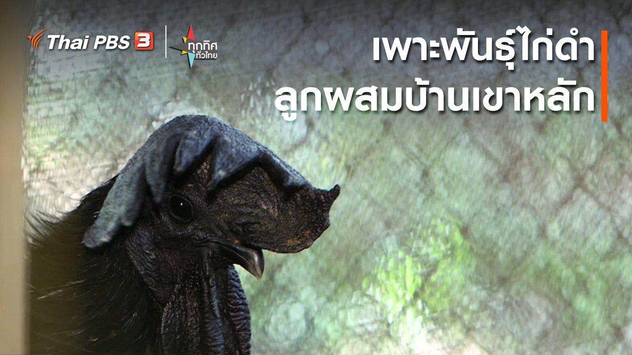 ทุกทิศทั่วไทย - เพาะพันธุ์ไก่ดำลูกผสมบ้านเขาหลัก