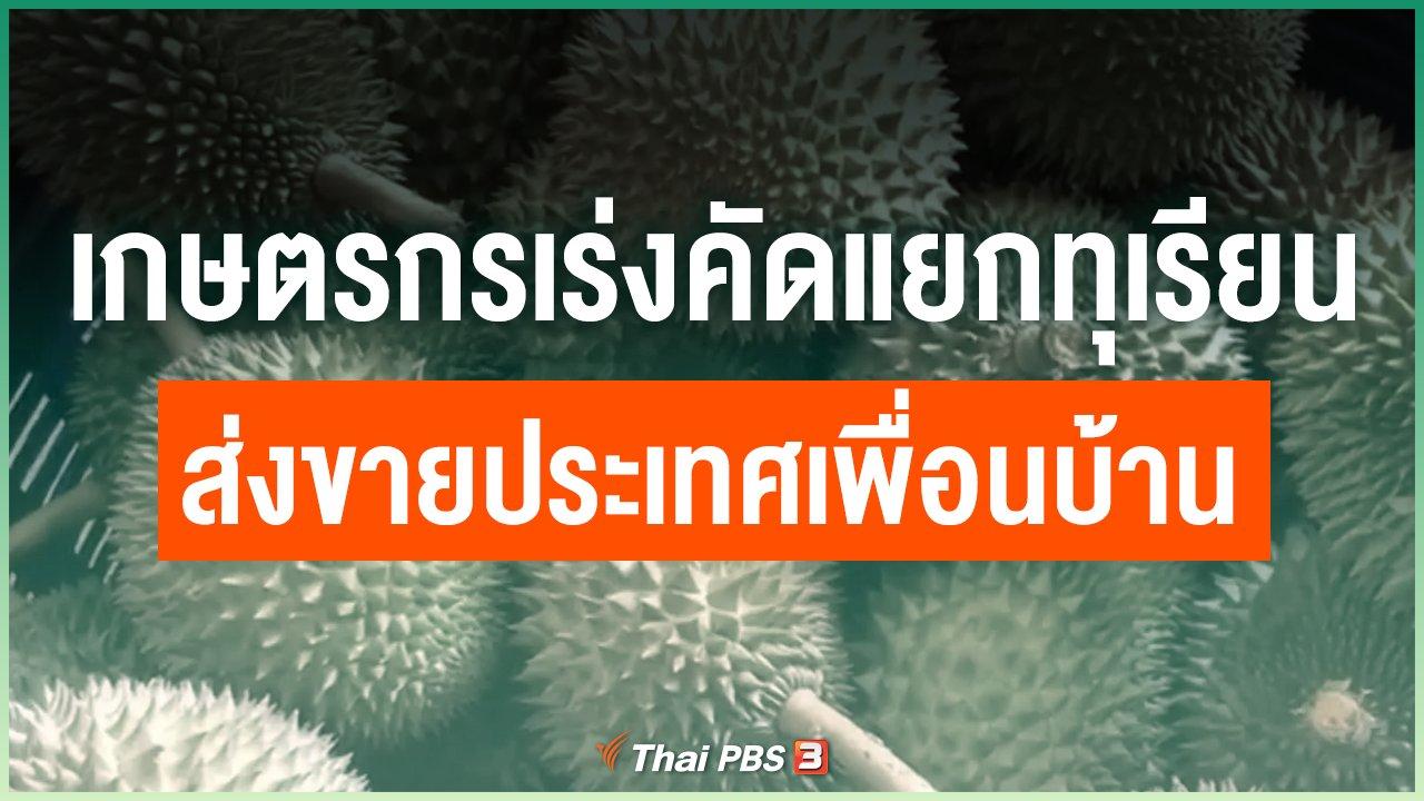 Coronavirus - เกษตรกรเร่งคัดแยกทุเรียนส่งขายประเทศเพื่อนบ้าน
