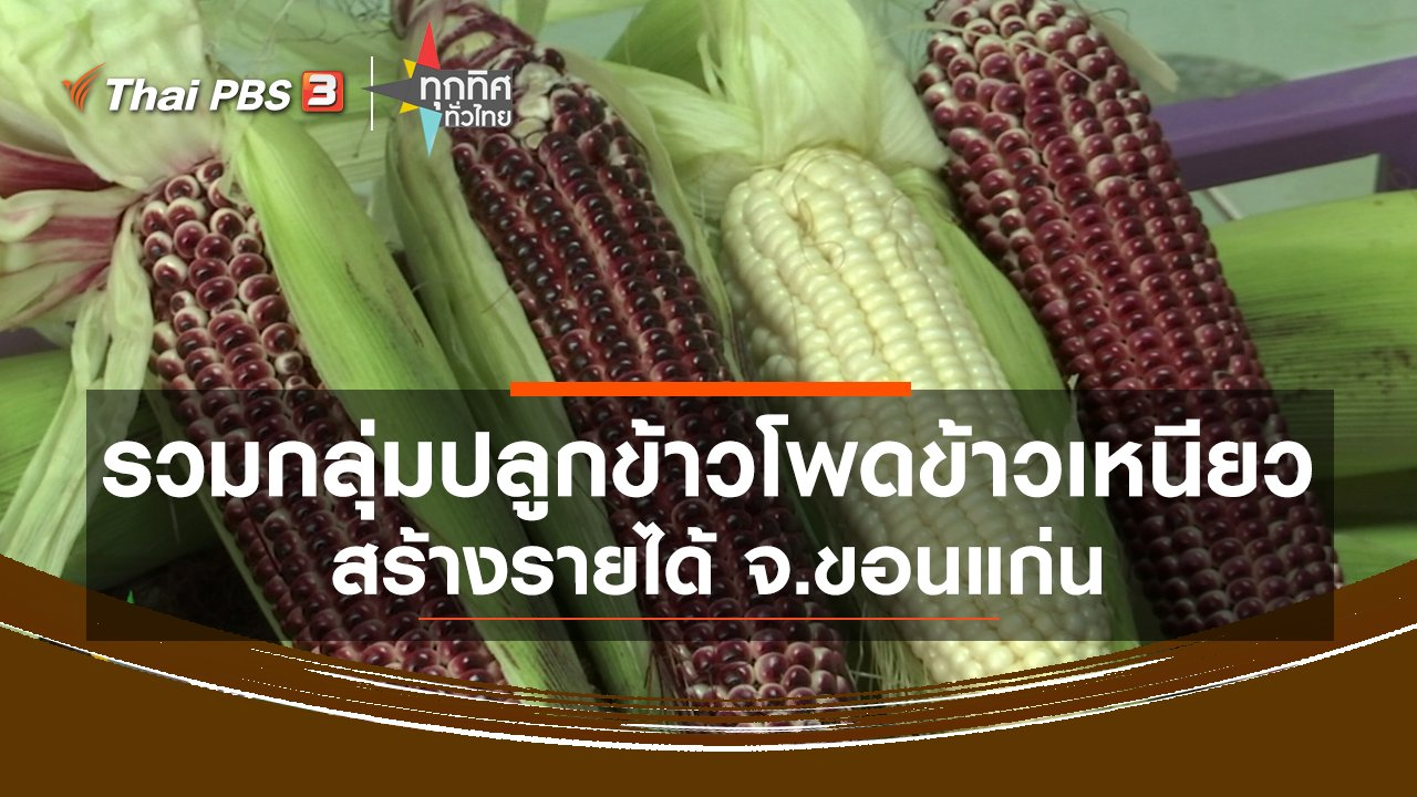 ทุกทิศทั่วไทย - รวมกลุ่มปลูกข้าวโพดข้าวเหนียวสร้างรายได้ จ.ขอนแก่น