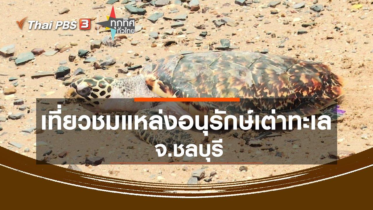 ทุกทิศทั่วไทย - เที่ยวชมแหล่งอนุรักษ์เต่าทะเล