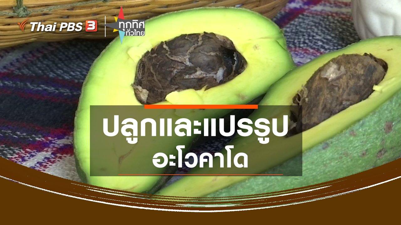 ทุกทิศทั่วไทย - ปลูกและแปรรูปอะโวคาโด