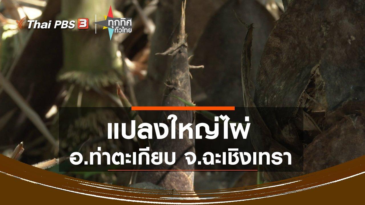 ทุกทิศทั่วไทย - แปลงใหญ่ไผ่ อ.ท่าตะเกียบ จ.ฉะเชิงเทรา