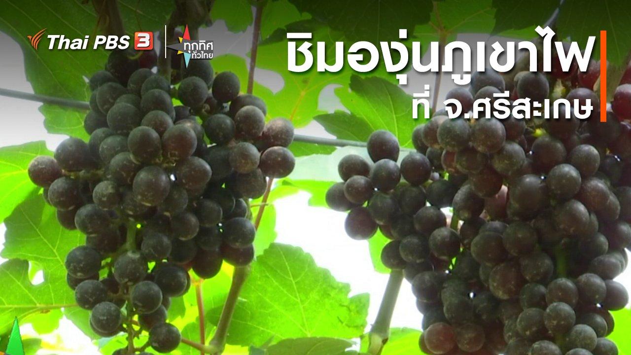 ทุกทิศทั่วไทย - ชิมองุ่นภูเขาไฟที่ จ.ศรีสะเกษ
