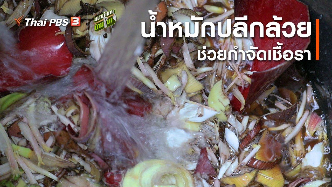 มหาอำนาจบ้านนา - สูตรลับฉบับบ้านนา : การทำน้ำหมักปลีกล้วย