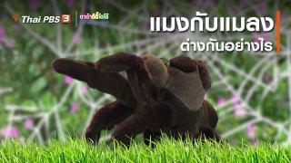 เกร็ดน่ารู้กับตาต้าตีตี้โตโต้ : แมงกับแมลงต่างกันอย่างไร