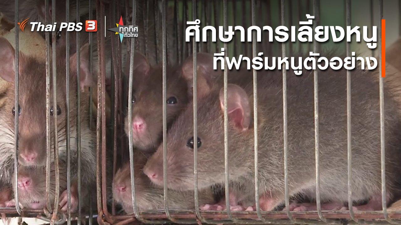 ทุกทิศทั่วไทย - ศึกษาการเลี้ยงหนู ที่ฟาร์มหนูตัวอย่าง จ.พระนครศรีอยุธยา