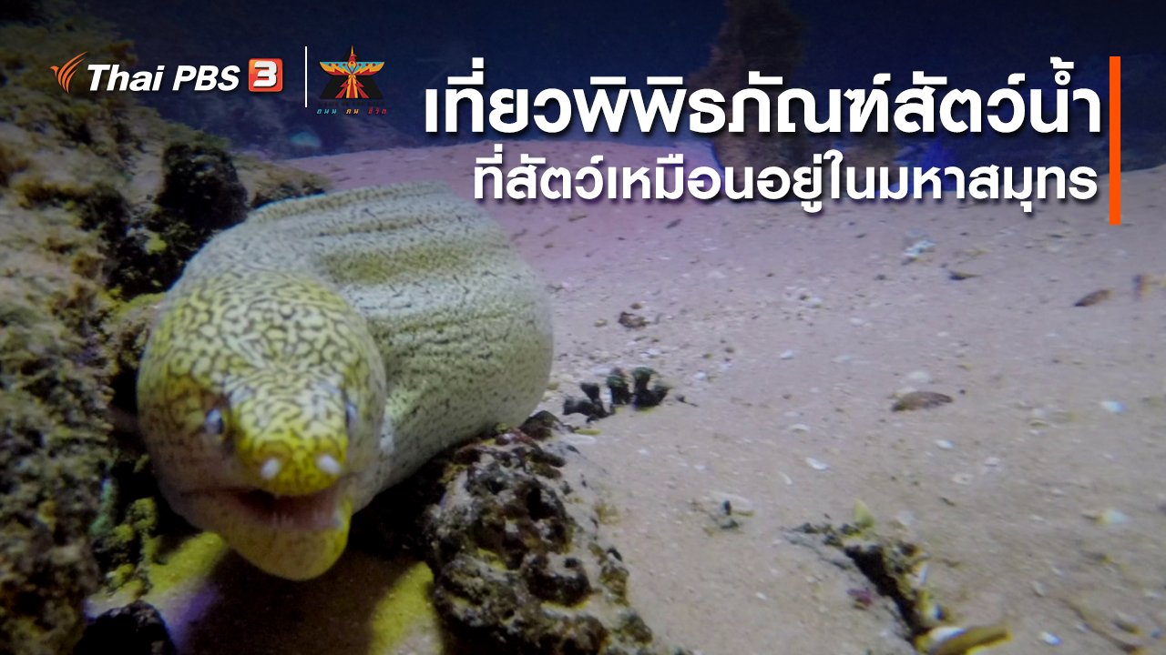 A Life on the Road  ถนน คน ชีวิต - เรื่องเล่าการเดินทาง : เที่ยวพิพิธภัณฑ์สัตว์น้ำ ที่เหมือนสัตว์อยู่ในมหาสมุทร