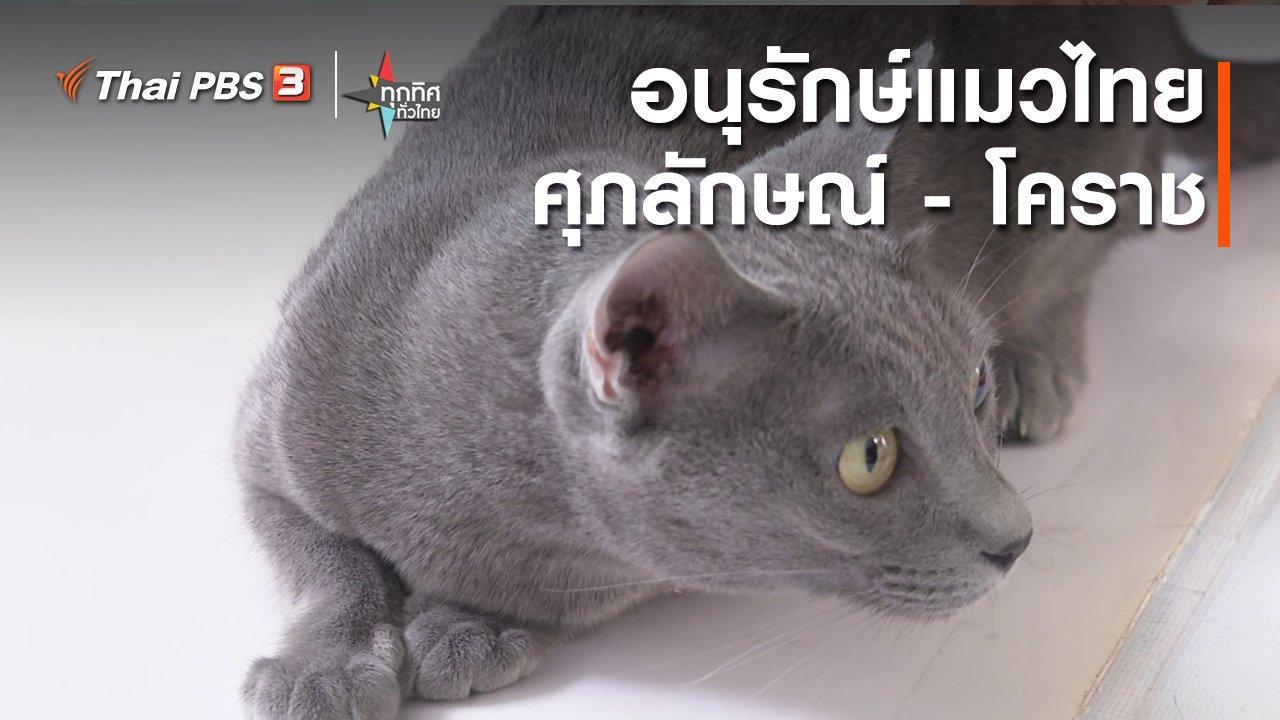 ทุกทิศทั่วไทย - อนุรักษ์แมวไทยศุภลักษณ์ - โคราช