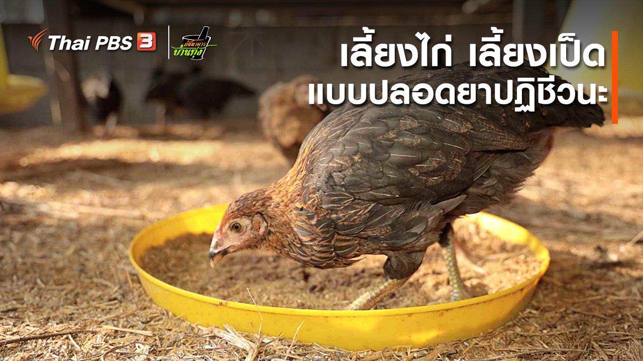 ภัตตาคารบ้านทุ่ง - คลิปบ้านทุ่ง : เลี้ยงไก่-เลี้ยงเป็ดแบบปลอดยาปฏิชีวนะ