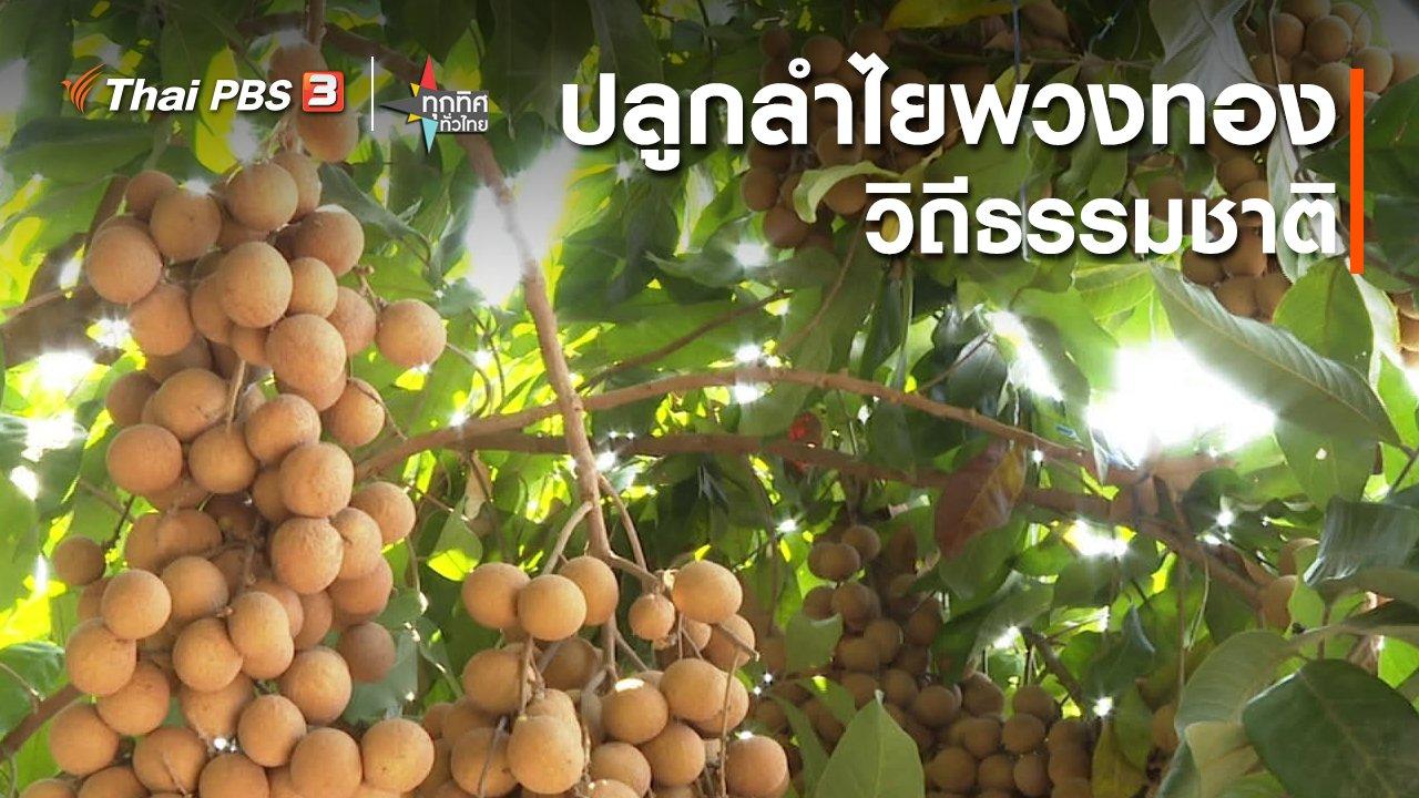 ทุกทิศทั่วไทย - อาชีพทั่วไทย : ปลูกลำไยพวงทองวิถีธรรมชาติ จ.กาญจนบุรี