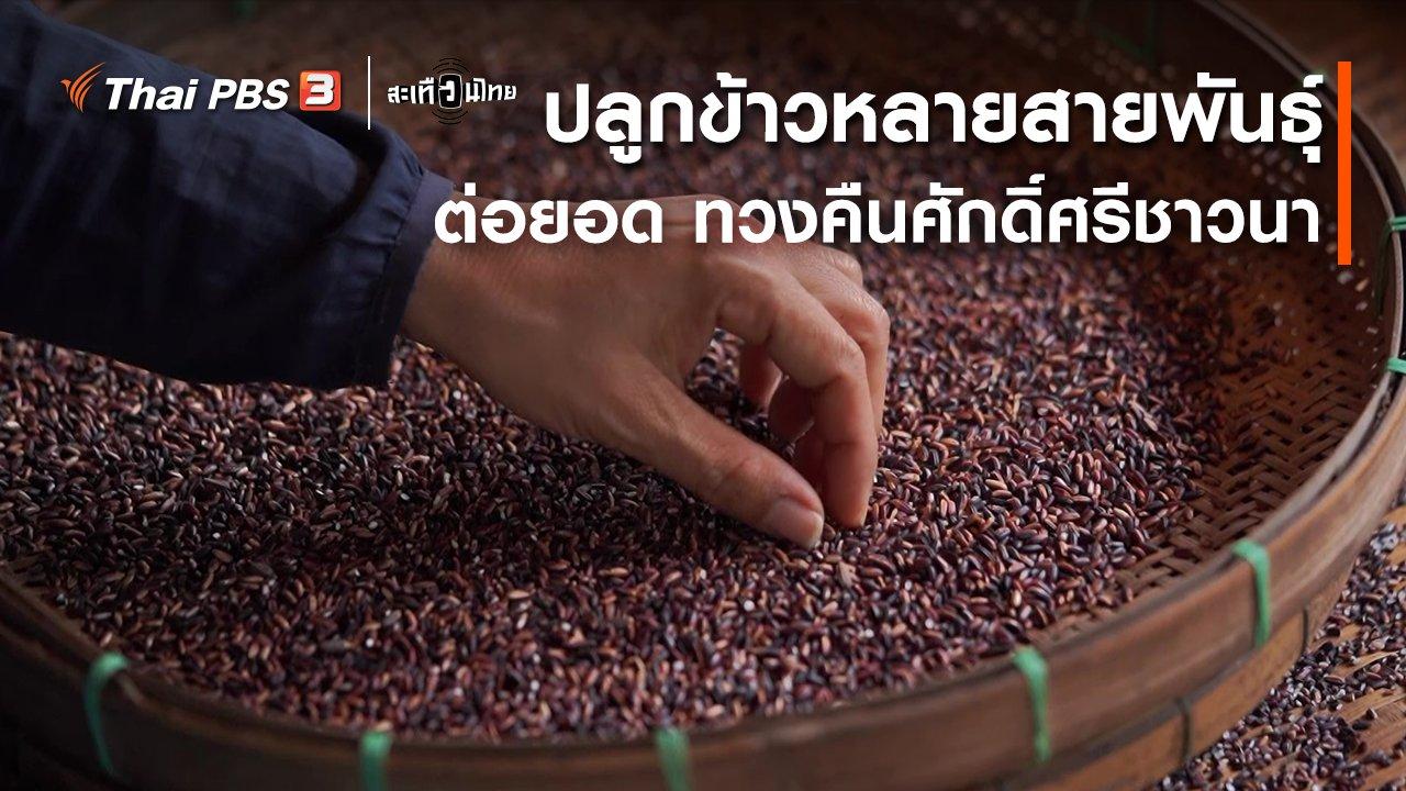สะเทือนไทย - ปลูกข้าวหลายสายพันธุ์ ต่อยอด ทวงคืนศักดิ์ศรีชาวนา