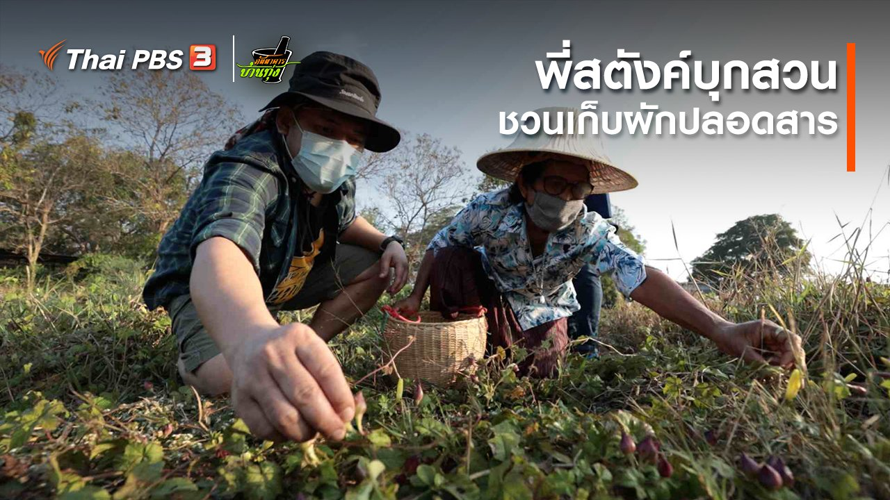 ภัตตาคารบ้านทุ่ง - คลิปบ้านทุ่ง : พี่สตังค์บุกสวน ชวนเก็บผักปลอดสาร
