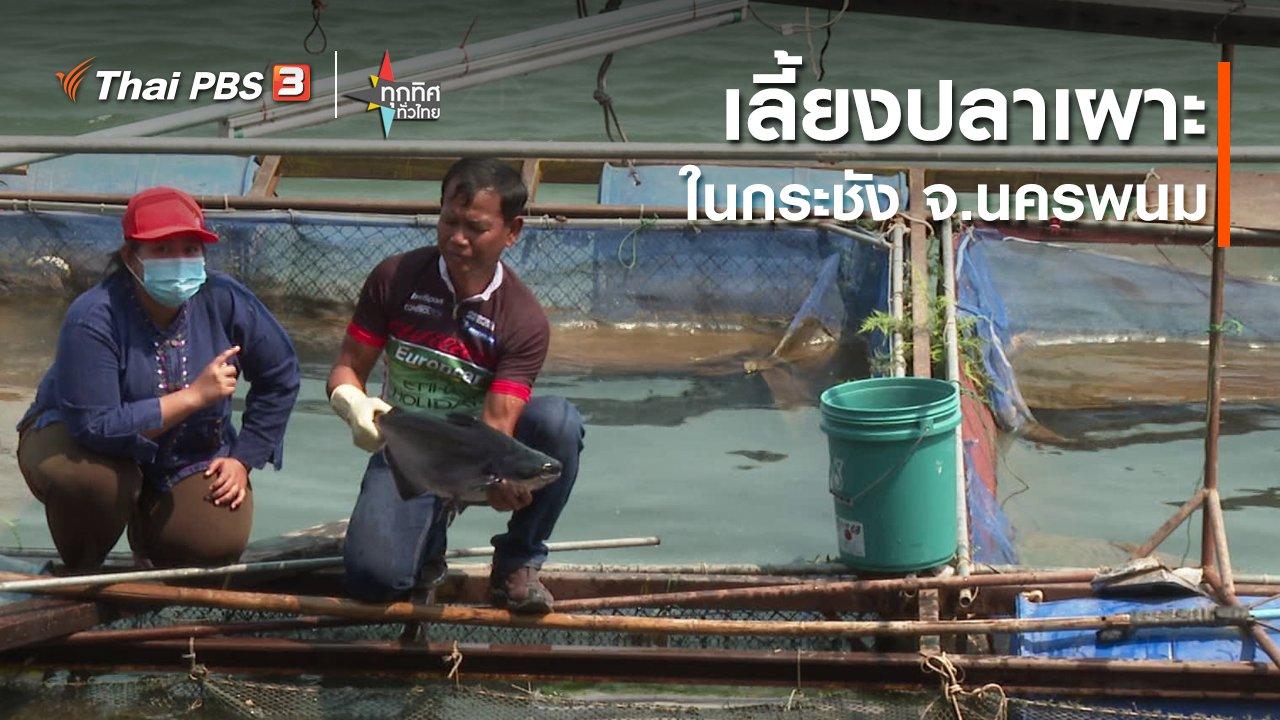 ทุกทิศทั่วไทย - อาชีพทั่วไทย :  เลี้ยงปลาเผาะในกระชัง จ.นครพนม