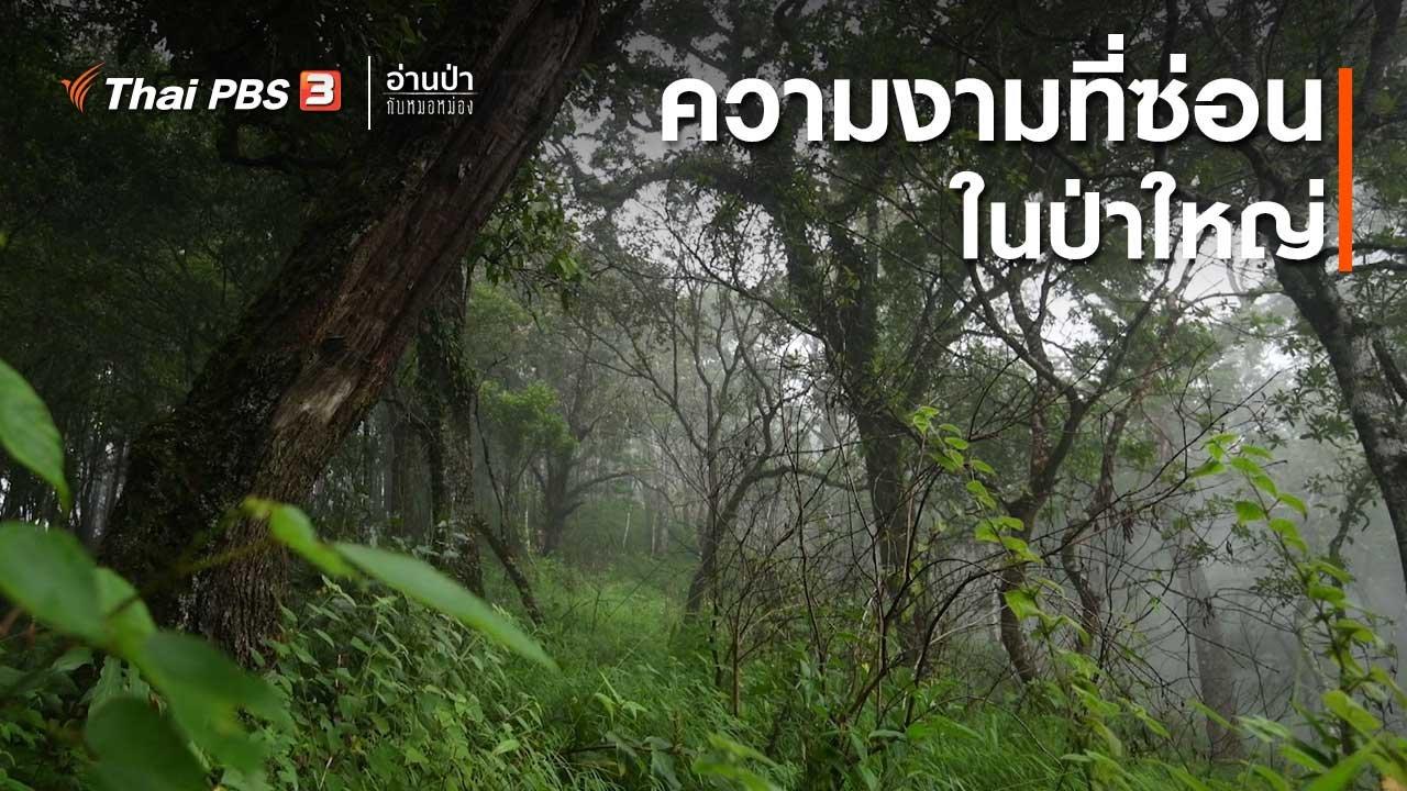 อ่านป่ากับหมอหม่อง - ส่องธรรมชาติ : ความงามที่ซ่อนอยู่ในป่าใหญ่