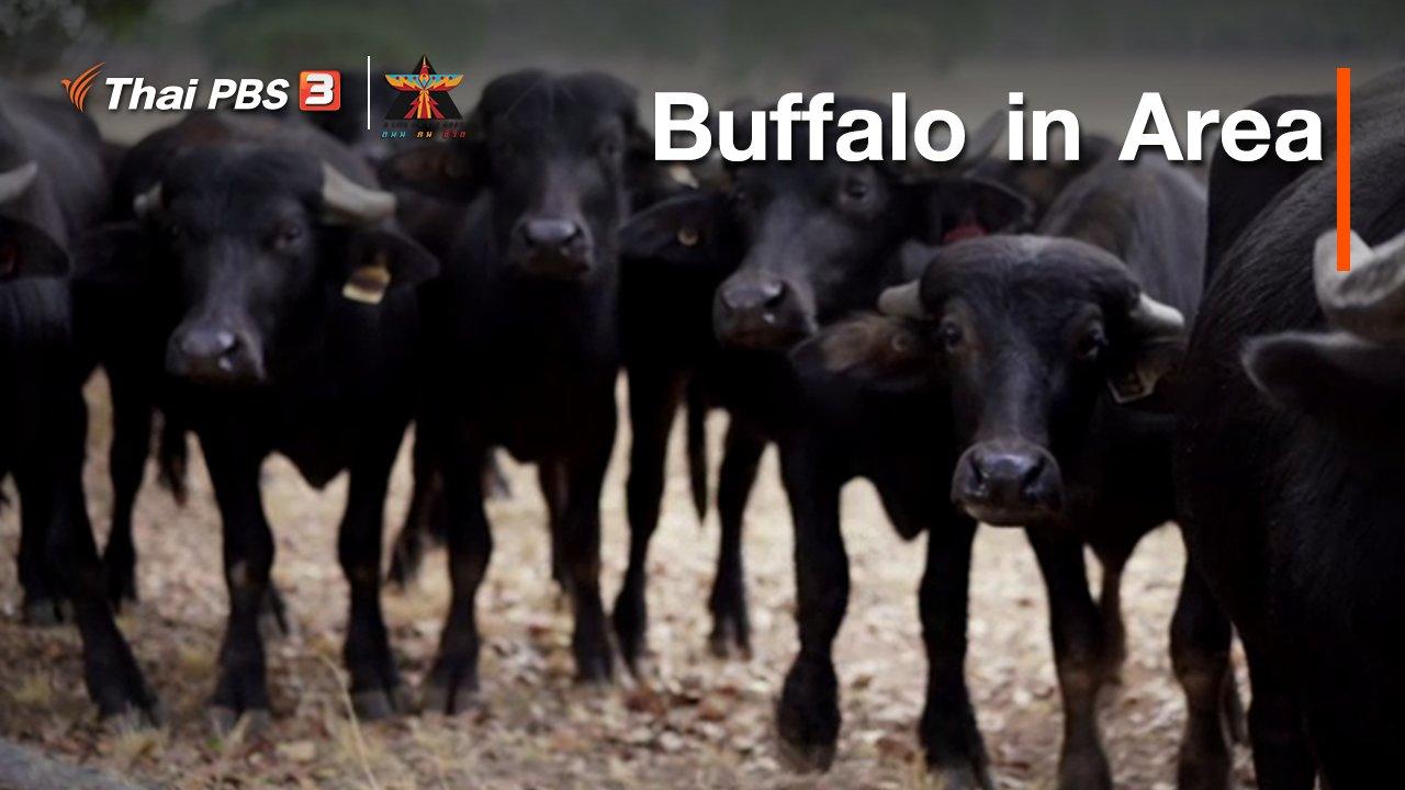 A Life on the Road  ถนน คน ชีวิต - เรื่องเล่าการเดินทาง : Buffalo in Area